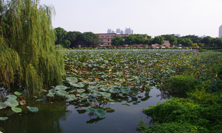广东省委珠岛宾馆荷花池项目
